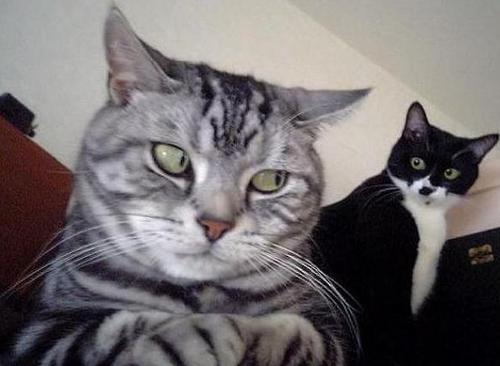 고양이 째려보는 짤