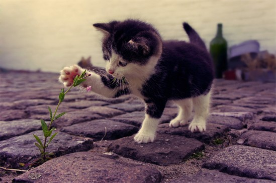 flower-kitty-street-animal-cat-cute