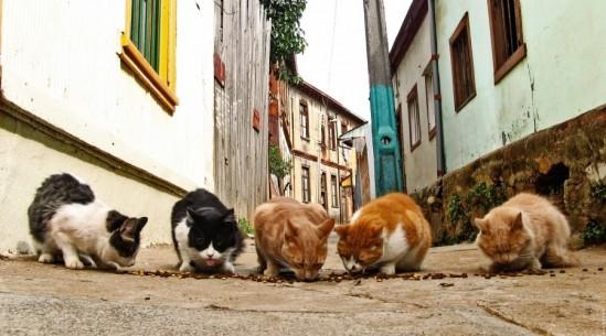street_cats
