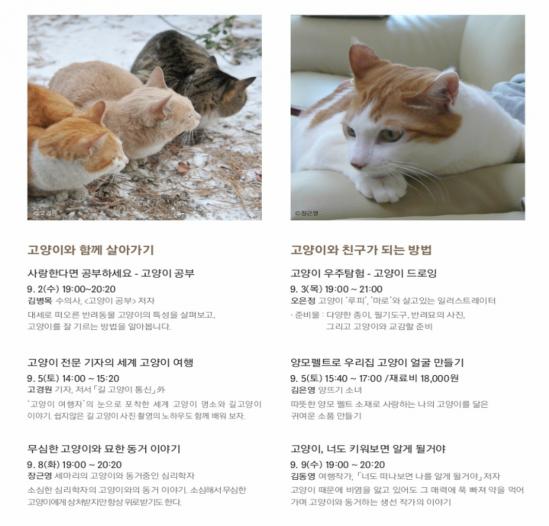 현대_고양이