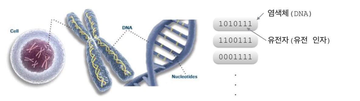 생물학에서의 유전자와 유전 알고리즘에서의 유전자, 유전 인자