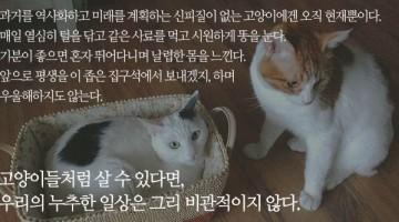 고양이는 어떻게 평생을 집안에서만 살 수 있을까?