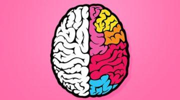 '좌뇌형과 우뇌형', 과연 사실일까?