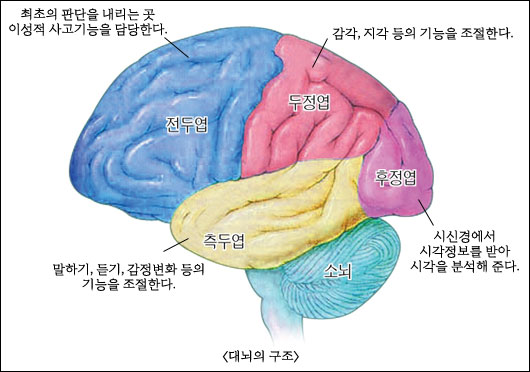 독서는 대뇌의 많은 부분을 사용하는 복잡한 과정이다