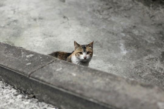 출처: 길고양이 집사의 일기