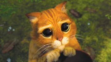 기분이 좋아지는 고양이 동영상 11선