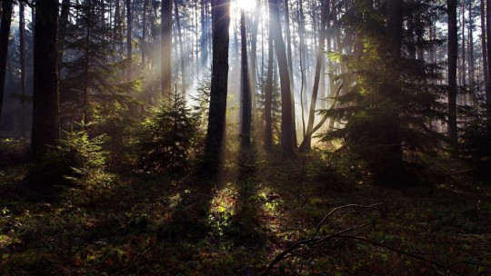 sunlight_in_the_woods_825