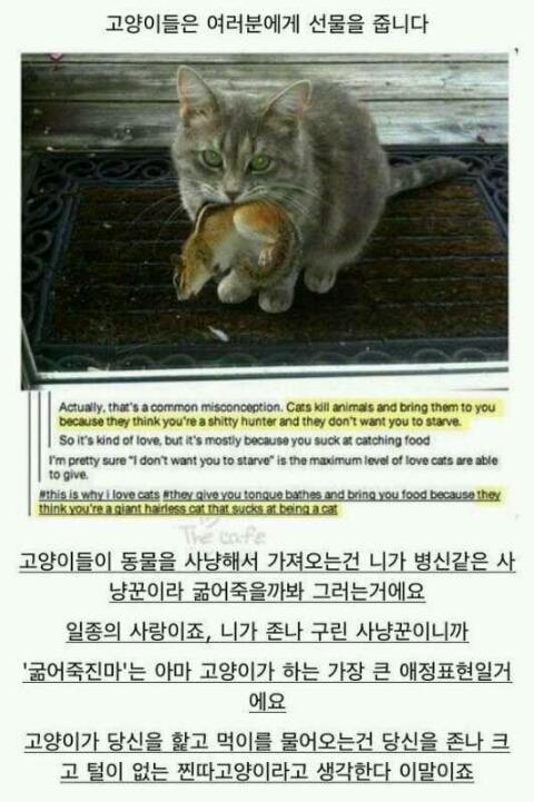 고양이_선물_무능한주인_찐따고양이