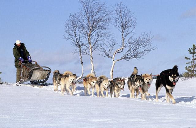 아이고 힘들다. 이제는 닝겐이 좀 끌어라. 출처: 핀란드 관광청의 flickr