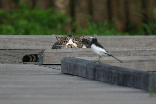 고양이_사냥_새