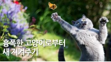고양이로부터 새를 보호하는 방법