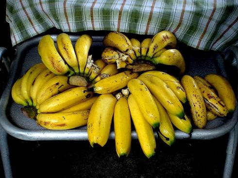 gros-michel-bananas