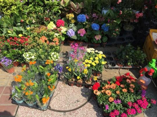 ※위대하진 않지만 소박하고 아름다운 동네 화원의 꽃들