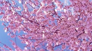 예쁜 봄이 아픈 사람들