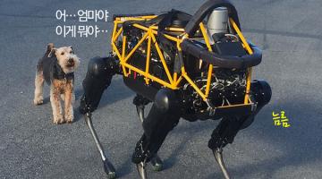 [동영상] 진짜 개가 로봇 개를 만났을 때