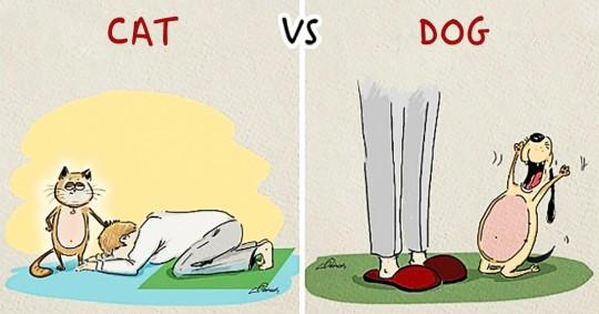 cat-versus-dogs-featured