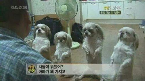차돌이 의문이 1패... 출처: KBS '생생정보통'