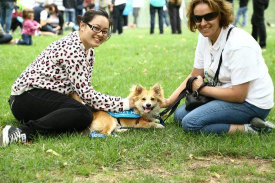 사랑스러운 강아지와 함께하는 점심시간, Human Walking Program
