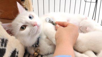 반려동물을 들이려는 이들을 위한 실천적 지침