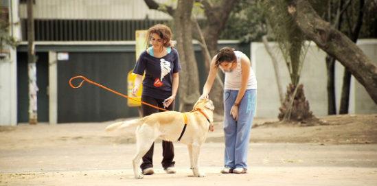 투명인간 주인과 산책하는 개?