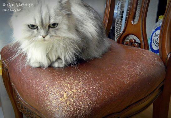 고양이가 머물던 자리...(출처: 길고양이 이야기)