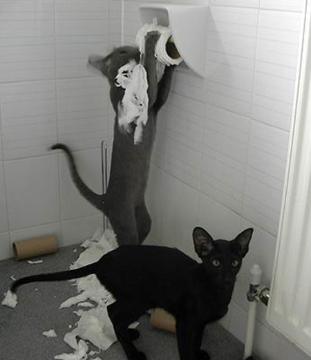cat-mess-in-bathroom