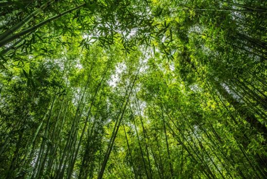 익명의 토론과 제보들이 일어나는 대나무숲 페이지