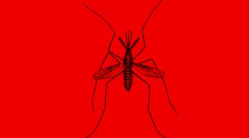 모기에게서 살아남는 방법 5가지
