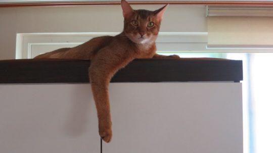 고양이입니다. 푸마 아닙니다(…)