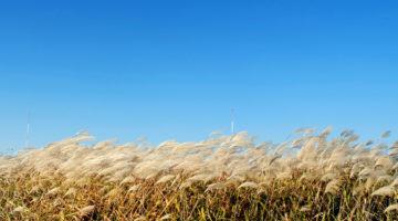 성큼 다가온 가을이 서글프면 조용히 사진집을 펼쳐보자