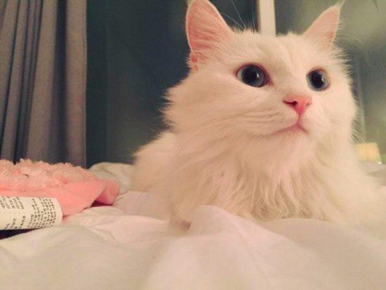 조종완 집 고양이가 당신을 응원합니다