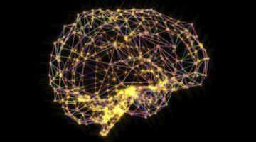 뇌는 칭찬보다 비난에 맞춰져 있다