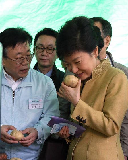 박근혜 감자