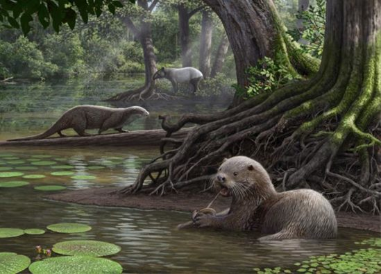 Credit: Cleveland Museum of Natural History