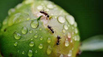 개미도 쉴 때는 쉬는 곤충입니다