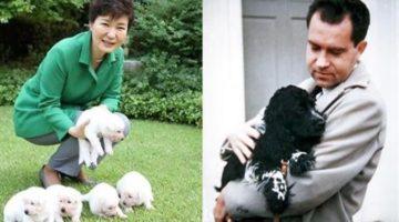 박근혜식 사랑법, 닉슨과는 너무 다른: 청와대 진돗개 vs. 백악관 스파니엘 운명 비교