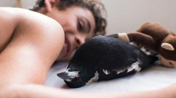 우리는 왜 반려동물을 기를까: 까치와 사는 한 가족의 이야기