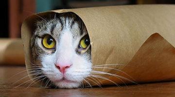 고양이는 죽어서 무엇을 남기나