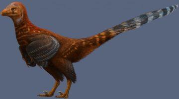 백악기 공룡의 깃털을 복원해보니, 백악기 닭?