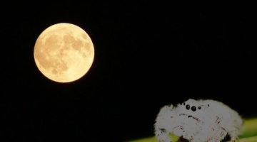 달을 볼 수 있는 거미
