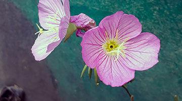 꽃과 나무 알기: 관계의 출발, 삶의 확장