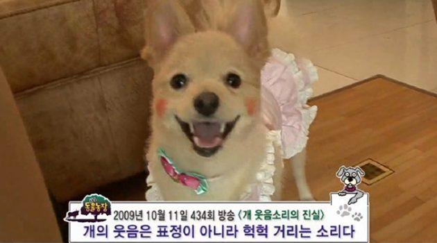개도 웃는 표정을 알아본다