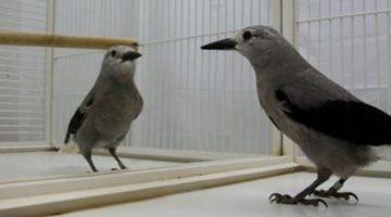 거울 실험과 동물의 마음