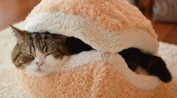 이번 생은 망했으니 다음 생에는 고양이로 태어나고 싶다.
