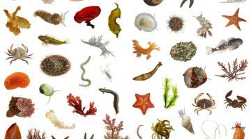 육지에 바다보다 더 많은 종류의 생물이 사는 이유
