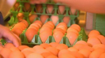 '살충제 계란' 파문: 건강한 먹거리에 대하여