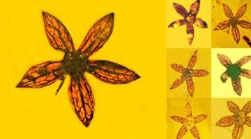 1억 년 전 피어난 7송이의 꽃