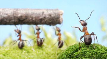 게으른 개미의 사연