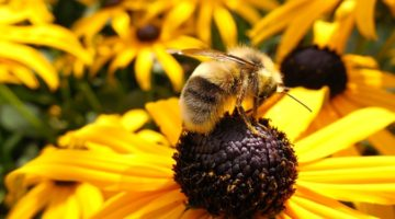 식물도 곤충의 냄새를 맡는다?