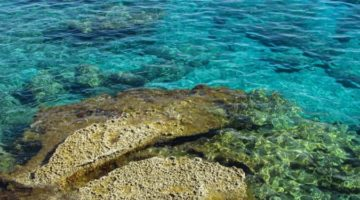 아프로디테의 섬, 사이프러스의 매력